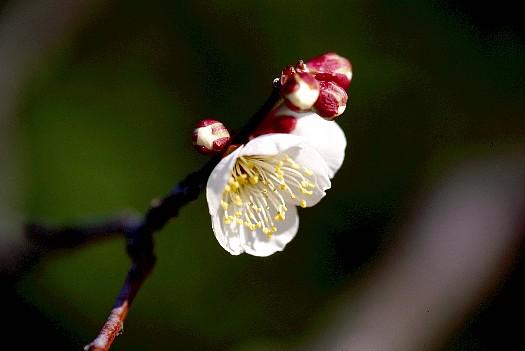 白鳥庭園 -初春第一撮影④-.jpg